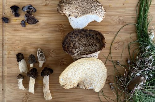 morels, wood ear, pheasant back, and wild onions